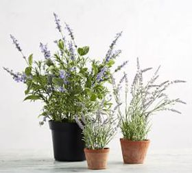 Pottery Barn Faux Potted Lavender