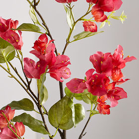 Crate Barrel Bougainvillea Stem