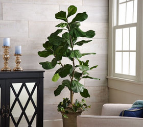 """""""As Is"""" 5' Potted Fiddle Leaf Tree in Pot by Valer"""