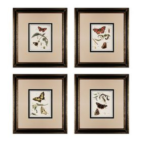 'Butterfly Metamorphisis' 4 Piece Framed Graphic A
