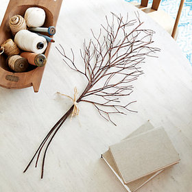 Bare Branches - Set of 3