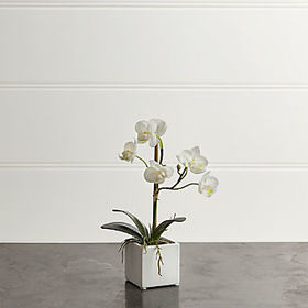 Crate Barrel Potted Orchid Plant