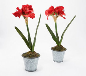"""""""As Is"""" Set of (2) 22"""" Faux Amaryllis Potted Plant"""
