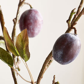 Crate Barrel Plum Stem