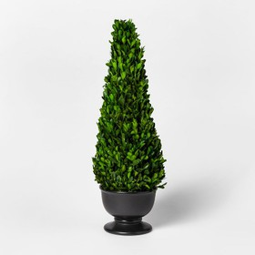 Preserved Boxwood conetree - Smith & Hawken™