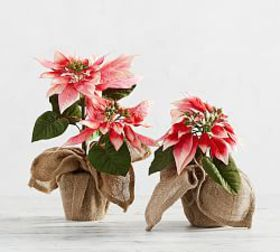 Pottery Barn Faux Potted Pink Poinsettia