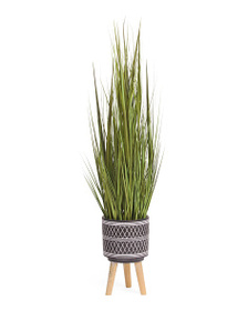 SIENA 60in Onion Grass In Cement Pot With Wooden S
