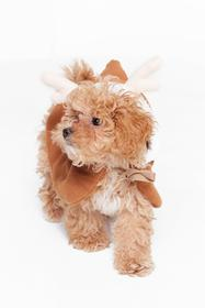 Nasty Gal Brown Santa's Little Helper Reindeer Dog