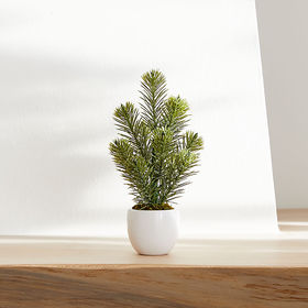 Crate Barrel Potted Mini Pine Tree