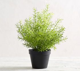 Pottery Barn Faux Potted Asparagus Fern