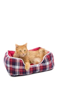 Duck River Textile Braxton Red Plaid Pet Bed