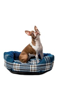 Duck River Textile Hadley Rounded Pet Bed - Denim
