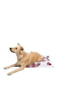 Duck River Textile White/Red Hadley Square Pet Bed