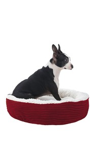 Duck River Textile Small Red Caden Corduroy Pet Be