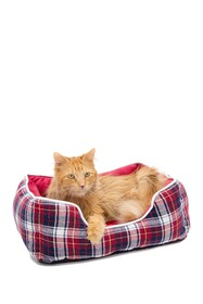 Duck River Textile Braxton Plaid Pet Bed - Red