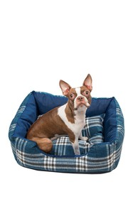 Duck River Textile Hadley Small Square Pet Bed - D
