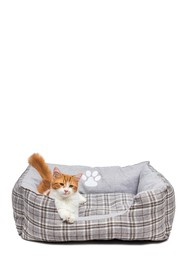 Duck River Textile Harlee Small Square Pet Bed